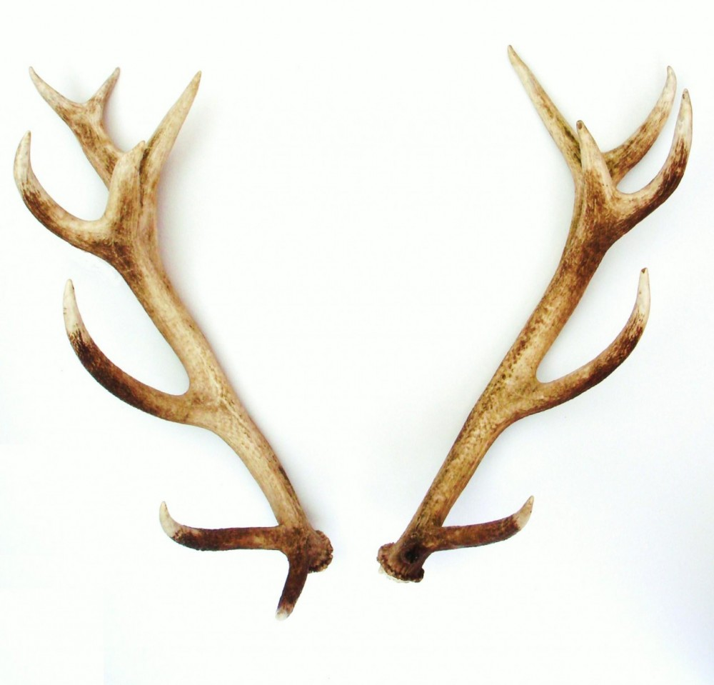 Where Can I Buy Antlers For A Car